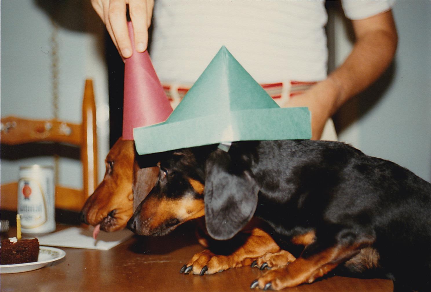 Happy Birthday Dachshund Eating Cake