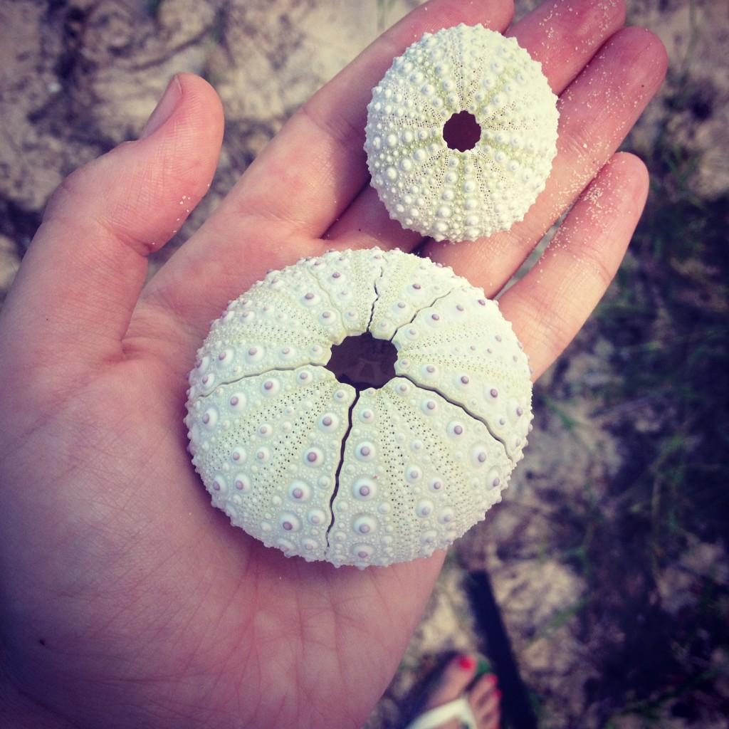 Urchin skeletons