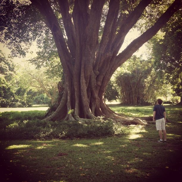 Giant tree (and Al)