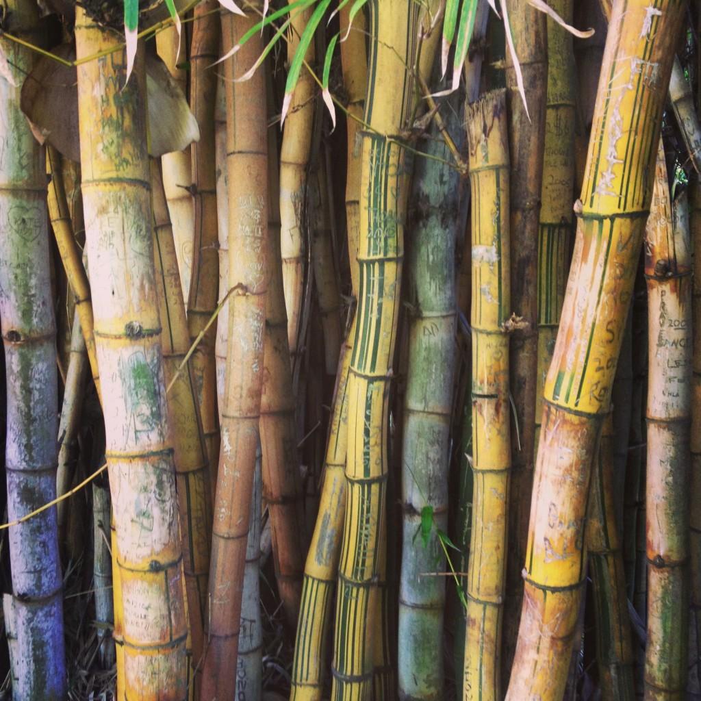 Bamboo copse