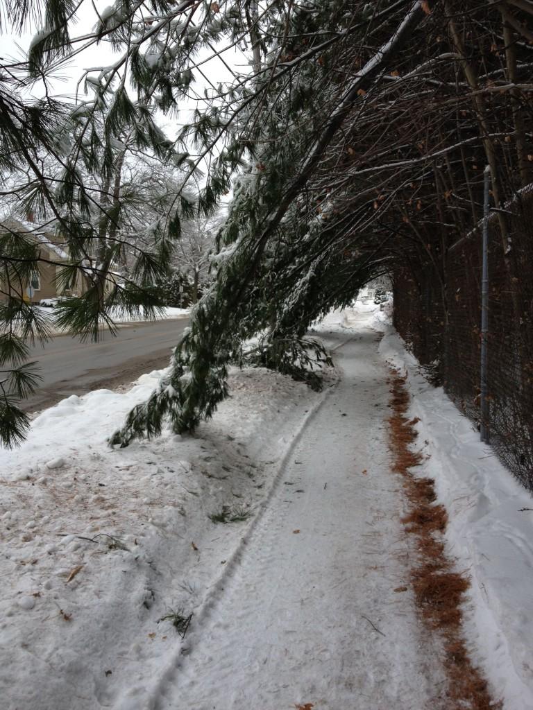 Snowy Bangor