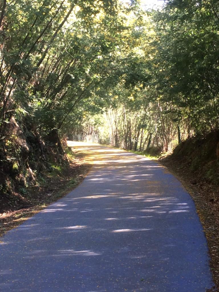 Ecopista path